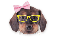 Cute girl dog with glasses
